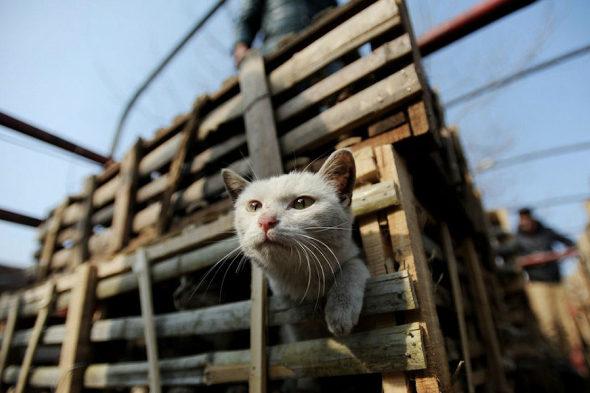 【中国】食用の「野良猫2800匹」を救出1