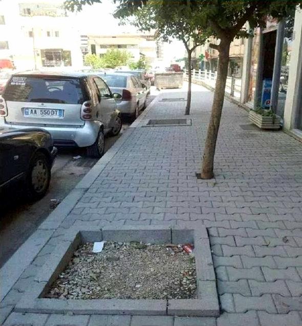 【画像】街路樹がなんかおかしい