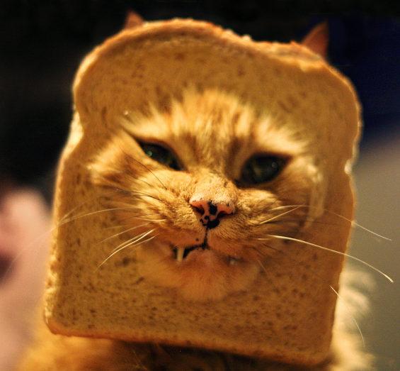食パンに顔はめするネコ2
