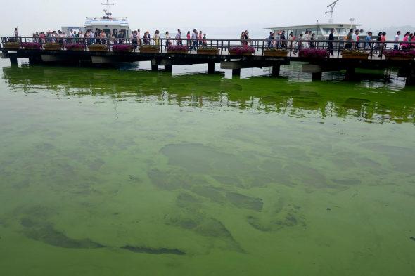 【中国】太湖に緑藻異常発生5