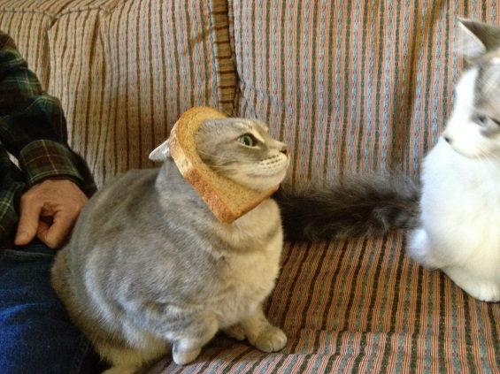 食パンに顔はめするネコ8