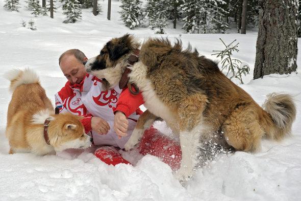 プーチン大統領と秋田犬「ゆめ」 3