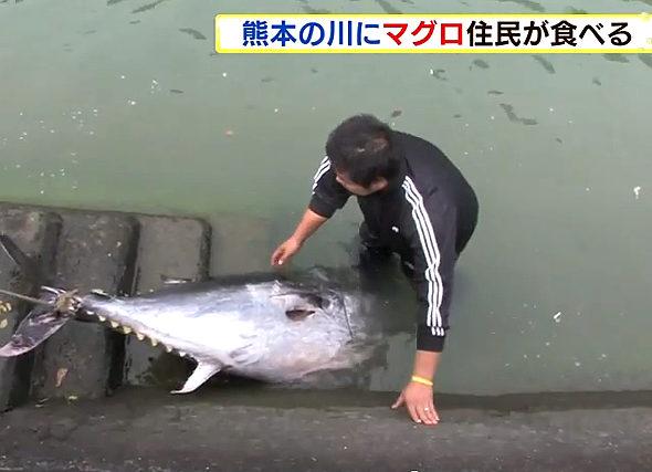 熊本、川で重さ100kg超の「マグロ」が見つかる!