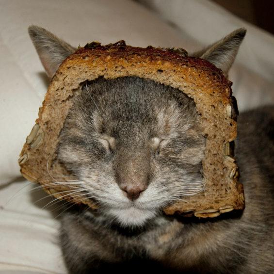食パンに顔はめするネコ6