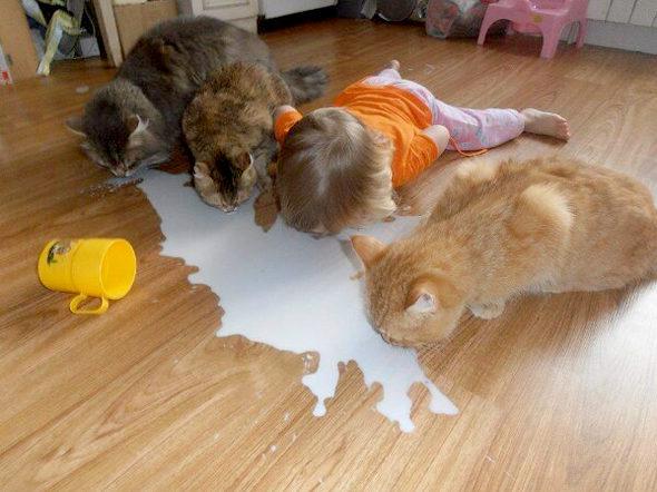 【画像】ニャンコたちと一緒にミルクを飲む娘
