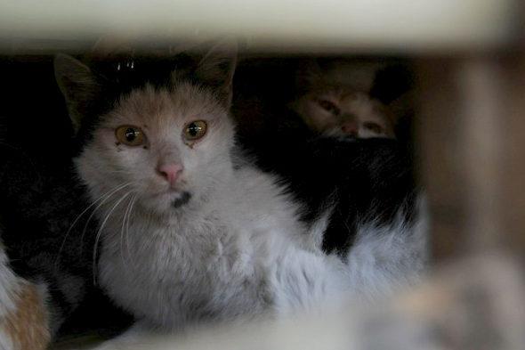 【中国】食用の「野良猫2800匹」を救出6