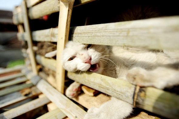 【中国】食用の「野良猫2800匹」を救出3