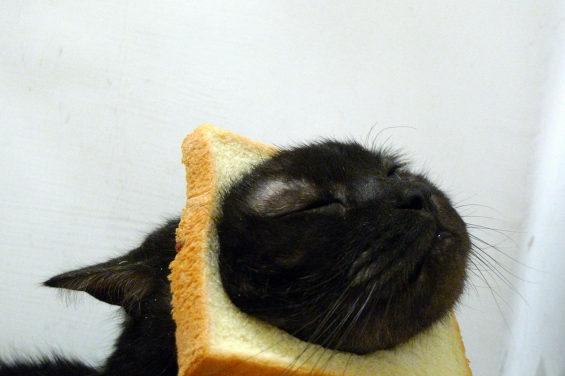 食パンに顔はめするネコ5
