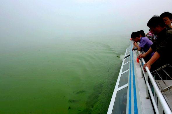 【中国】太湖に緑藻異常発生4