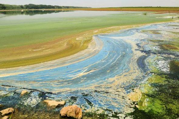 【中国】杭州湾の汚染ゴミの油絵1