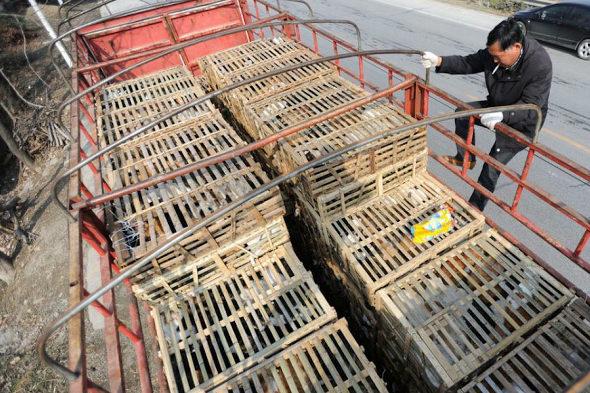 【中国】食用の「野良猫2800匹」を救出4