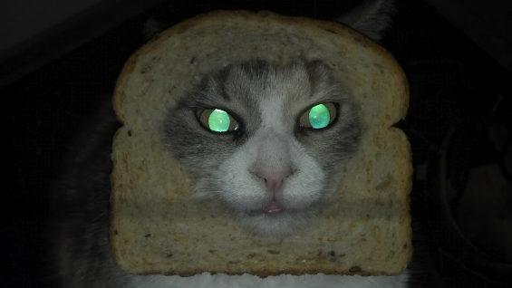 食パンに顔はめするネコ9