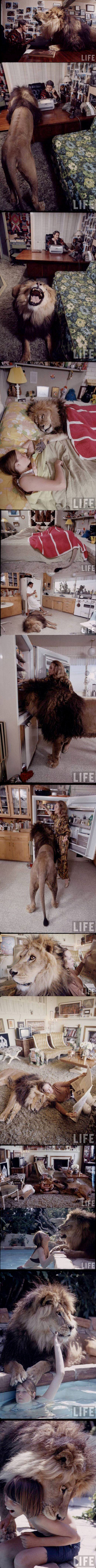 【画像】 ライオンを猫のように家の中で飼うある家族