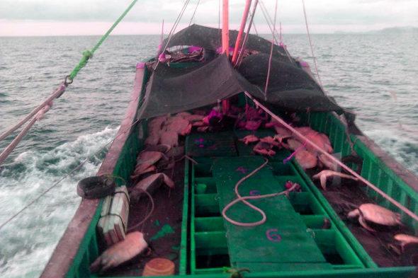 フィリピン政府、南シナ海で拿捕した中国ウミガメ密漁船の証拠写真を公開!4