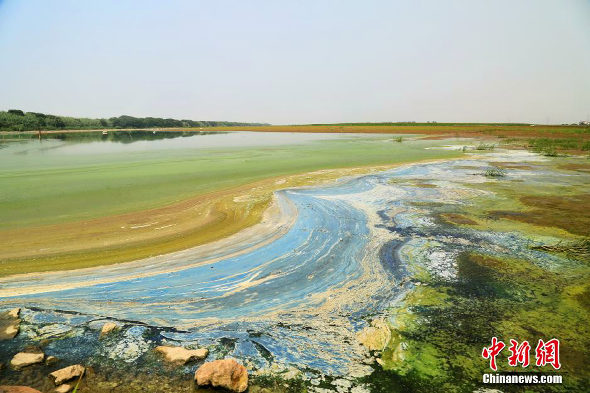【中国】杭州湾の汚染ゴミの油絵2