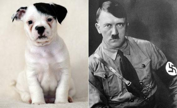 英国、ヒトラーに似ているワンコ1