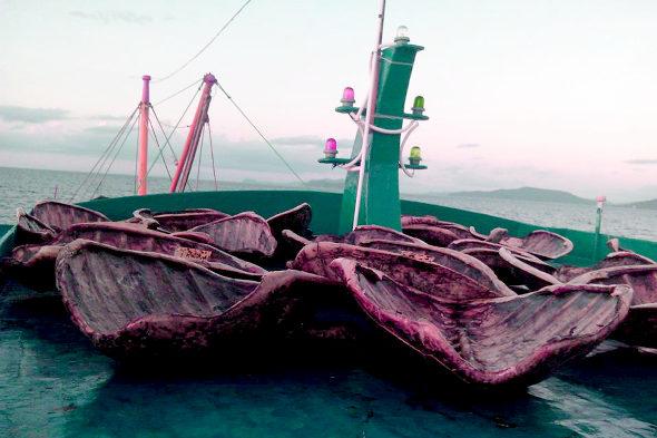 フィリピン政府、南シナ海で拿捕した中国ウミガメ密漁船の証拠写真を公開!3