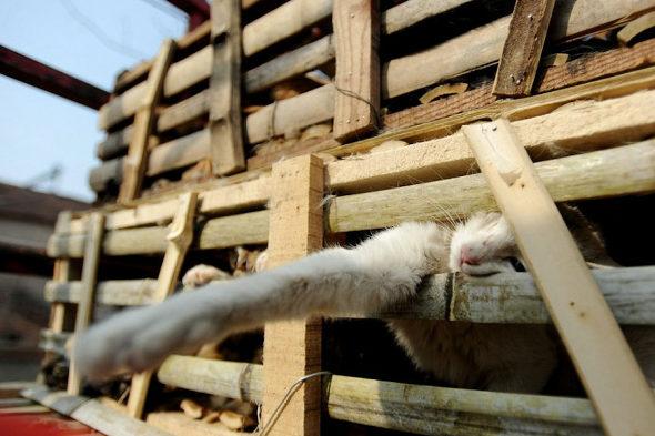 【中国】食用の「野良猫2800匹」を救出2