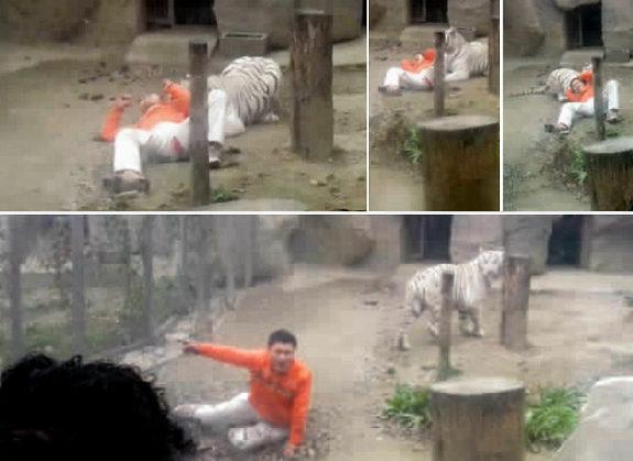 【中国】動物園で男がトラの檻に乱入