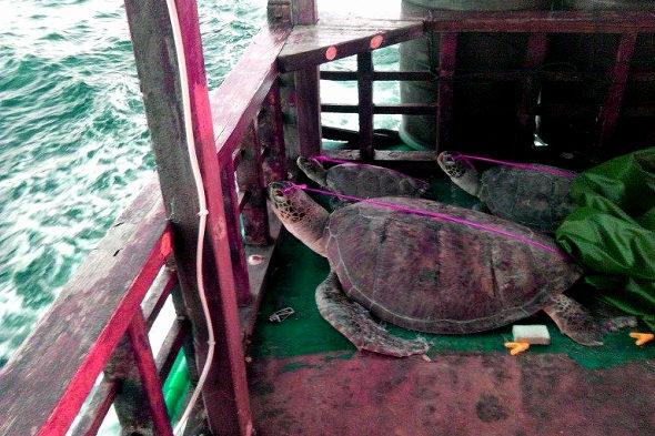 フィリピン政府、南シナ海で拿捕した中国ウミガメ密漁船の証拠写真を公開!1