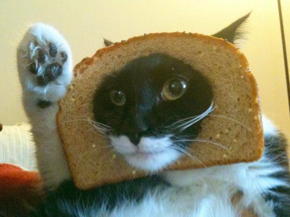 食パンに顔はめするネコ7