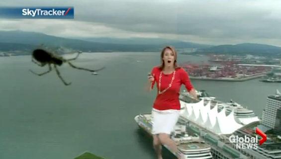 お天気カメラのレンズに蜘蛛登場