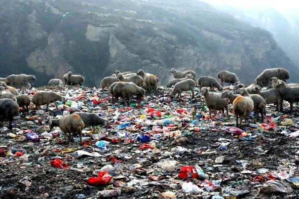 中国人の64%が自身を「環境保護主義者」と認識=調査4