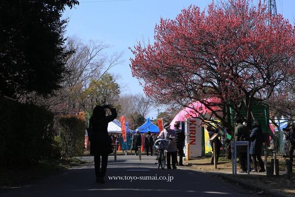 さいたまの風景 大宮第2公園 梅林公園