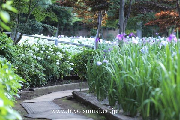 見沼 染谷しょうぶ園 さいたまの風景