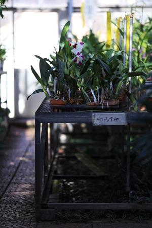 さいたまの風景 温室