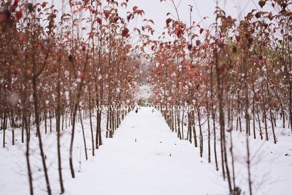 さいたまの風景 雪景色 見沼田んぼ