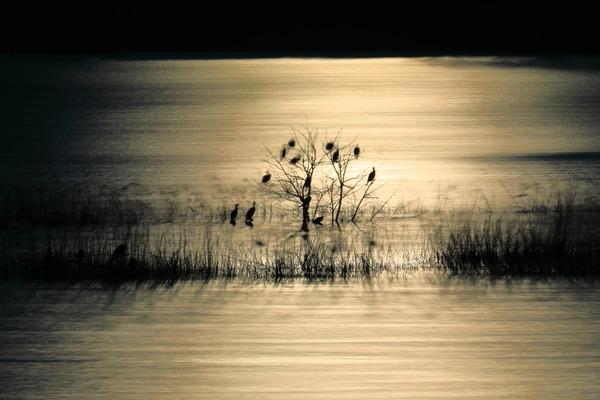 さいたまの風景 芝川第一調整池