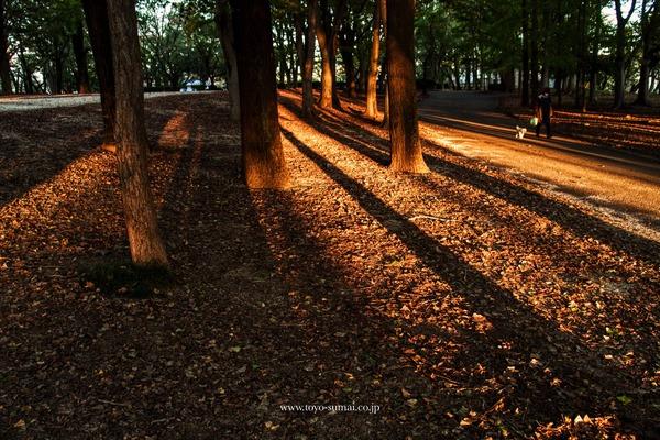 秋の与野公園