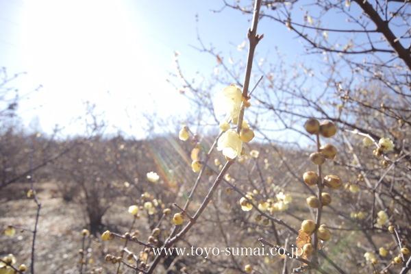 さいたまの風景 大宮花の丘公園