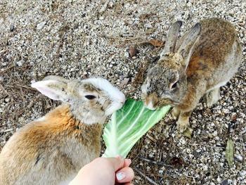 1112ウサギ2