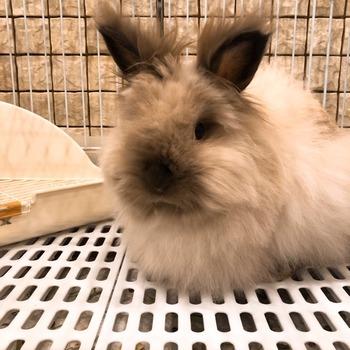 1112ウサギ