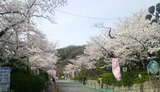 桜・水の博物館