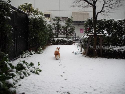 雪〜〜〜〜〜〜\(◎o◎)/!