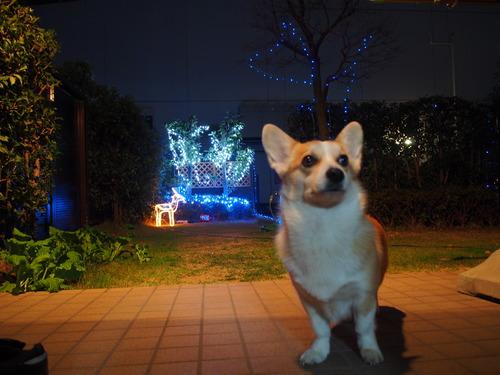 メーリークリスマス('-^v)Thanks♪