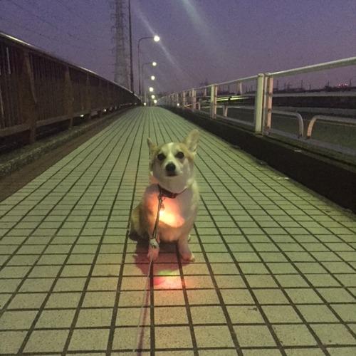 チカチカ・ランプ♪