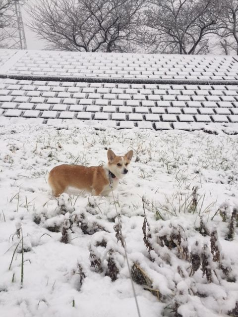 土手の雪景色
