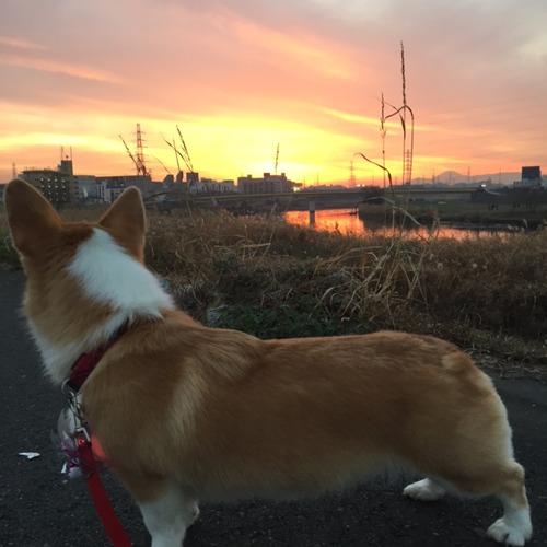 お散歩日和♪