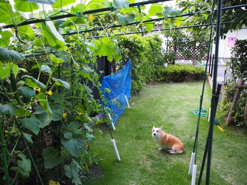 家庭菜園☆