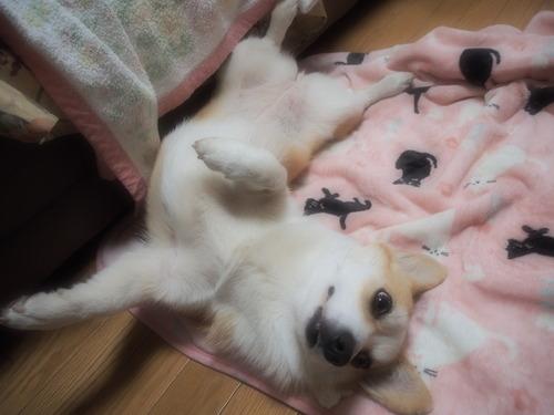 おやすみ〜〜