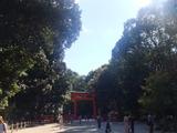 下鴨神社の糺の森(ただすのもり)