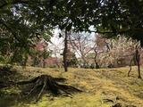 京の梅林といえば, 北野天満宮か城南宮