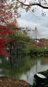 紅葉はやや過ぎた感の兼六園、2012年11月24日