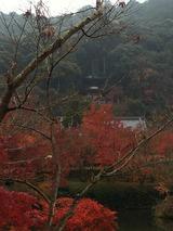 落葉の 小枝に結ぶ 水滴か「永観堂」