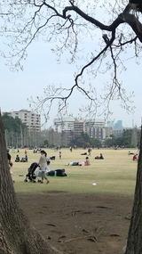 新宿御苑から慶応病院を望む