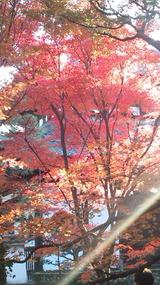 京都・東福寺 の 紅葉も人気スポット